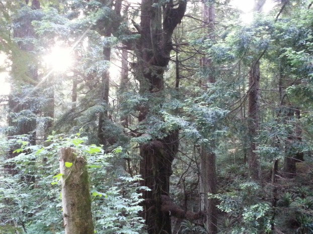 There are several old growth trees on the CR campus.