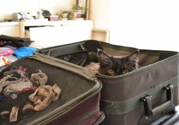 are-you-going-to-travel-soon-cats-kitten-kitty-pic-picture-funny-lolcat-cute-fun-lovely-photo-images