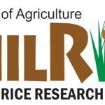 DA-PhilRice, nagsimula nang mamahagi ng libreng certified inbred seeds para sa darating na tag-araw