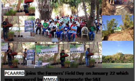 Ilocos Norte marks Farmer's Field Day on bamboo poles production