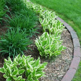 Inexpensive Landscaping Ideas Elegant 20 Easy Landscaping Ideas for Your Front Yard