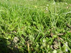 glueckliches gras
