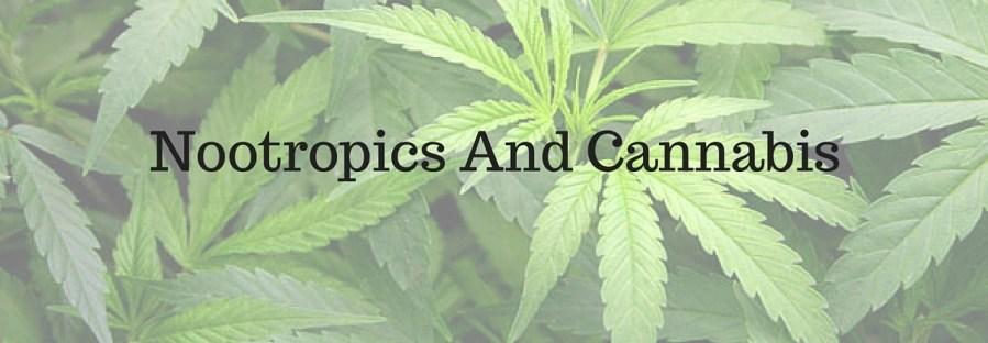 Nootropics And Cannabis