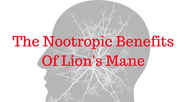 The Nootropic Benefits Of Lion's Mane - Nootropics Zone
