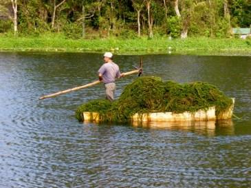 Algae removal - Selva Negra, Nicaragu