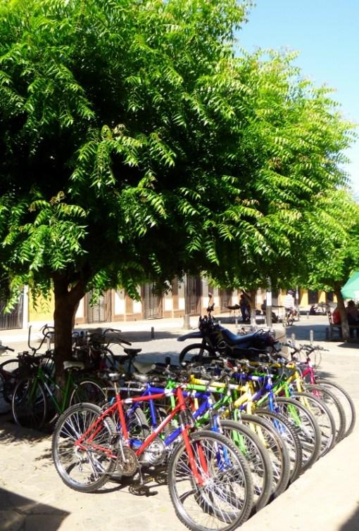 Calzada street - Granada