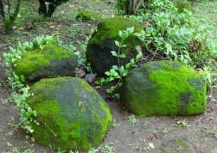 No moss grows on a rolling stone!
