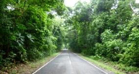 Lushly treed road to San Lorenzo