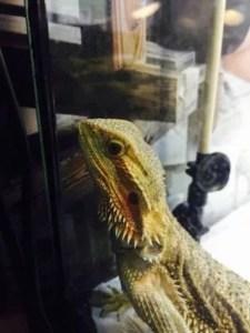 爬虫類の飼育に紫外線ライトは必要?おすすめや設置効果のまとめ