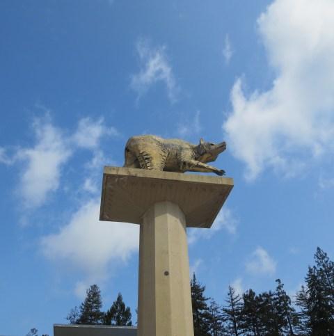 Bear in the Sky: UC Berkeley