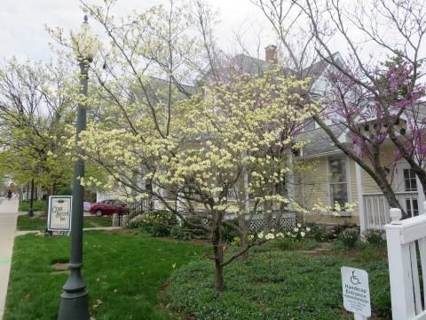 Spring at the Grant Street Inn