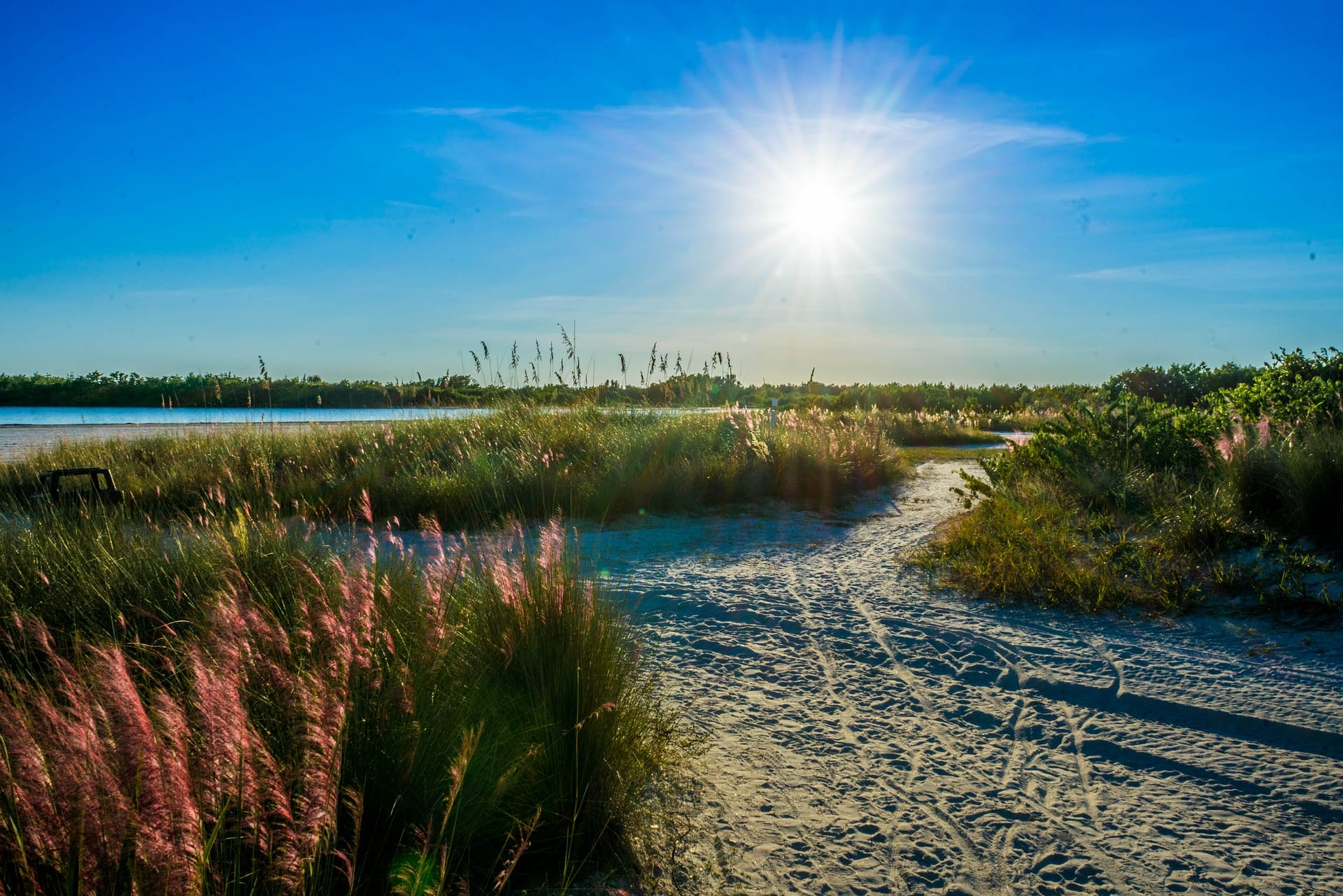 Fun things to Do on a Day Trip to Marco Island : Tiger Tail Beach, Marco Island, Florida
