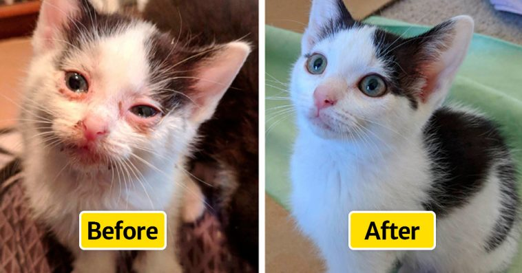 adopt-not-buy