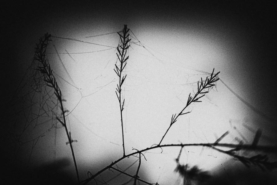 2015-10-sighisoara_034_resize