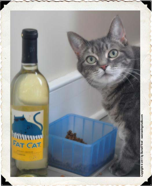 Fat Cat Wine Photo