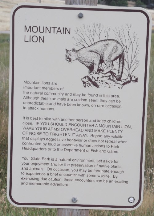 Sign Mountain Lion