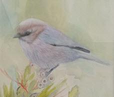 """""""Bushtit"""" detail, by Sandra Mele, transparent watercolor"""