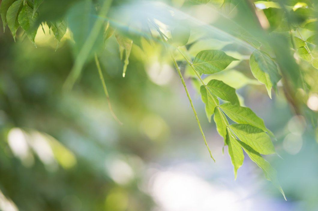 Garden Impressions by Eve | nordbrise.net (Impressionen aus dem Garten)