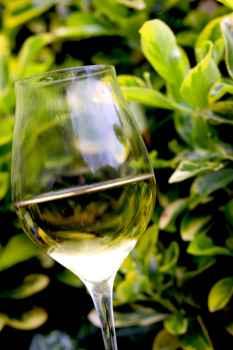 vini bianchi sudtirolo