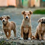 """Vorsicht bei """"Mitbringsel-Hunden"""""""