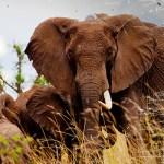 Vereint gegen Wilderei