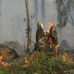 Waldbrandgefahr wegen Hitzewelle sehr hoch