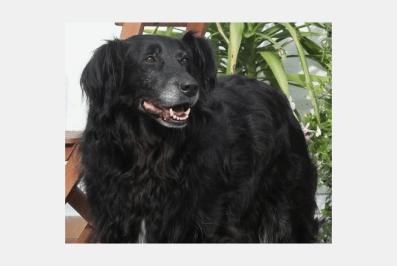 Screenshot_2019-03-05 Mischlingshund DARKLADY aus Nürnberg