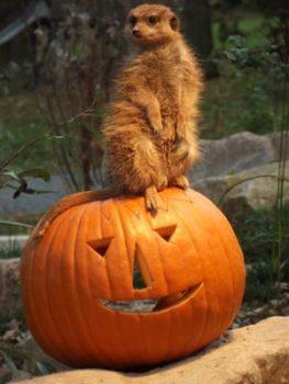 Halloween-c-Tierpark-Sababurg
