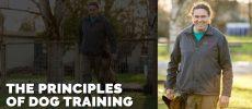 michael-ellis-the-principles-of-dog-training