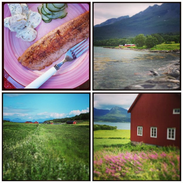 Landscapes from Northern Norway and typical Nordic food