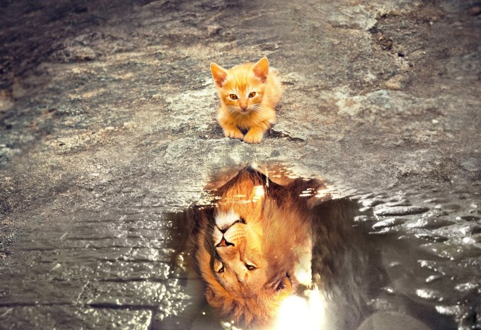 orange kitty looking in a puddle and seeing a lion reflected back