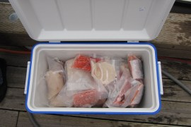 A Cooler of Fish