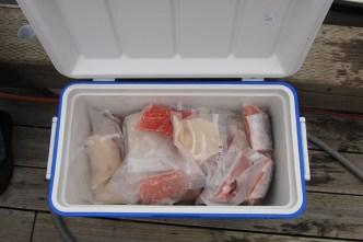 A Cooler of Fish