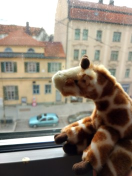 J the Giraffe was travelling with me as usual