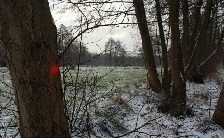Die Bäume im neuen Baugebiet zwischen Splitting und Bethlehem sind für die Fällarbeiten in den kommenden Wochen bereits markiert. Um das Gelände baureif zu bekommen, müssen rund 400 Bäume und 4000 Quadratmeter Gestrüpp geräumt werden. Foto: Stadt Papenburg