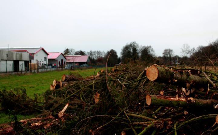 Um die Arbeiten für die Errichtung des Gewerbegebietes angehen zu können, mussten in den vergangenen Tagen mehrere Bäume in dem Bereich gefällt werden. Foto: Stadt Papenburg