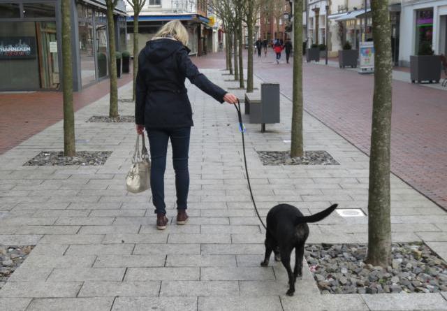Anleinpflicht: Wo Hunde im Lingener Stadtgebiet an die Leine müssen - Brut- und Setzzeit beginnt bald Foto: Stadt Lingen