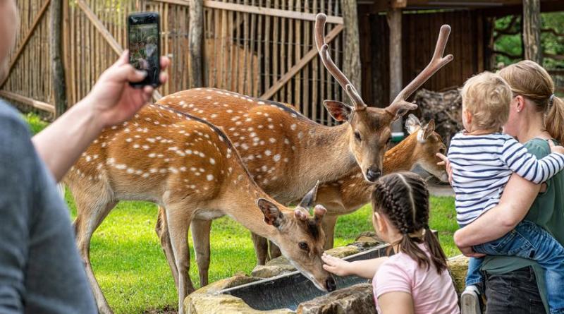 Neue Publikumslieblinge im Tierpark Nordhorn sind die bedrohten Vietnamsikahirsche. (Franz Frieling)