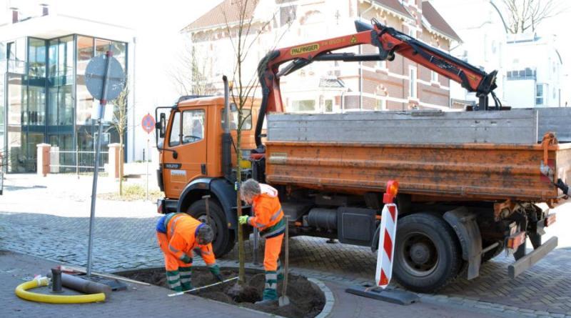 Bäume an Bentheimer Straße nachgepflanzt - Foto: Stadt Nordhorn