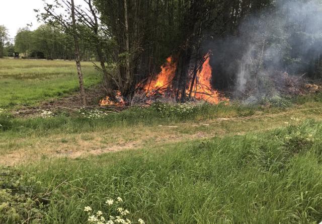 Lage beim Eintreffen. Am Anfang eines Waldstückes brennt es.. Foto: Feuerwehr Neuenhaus