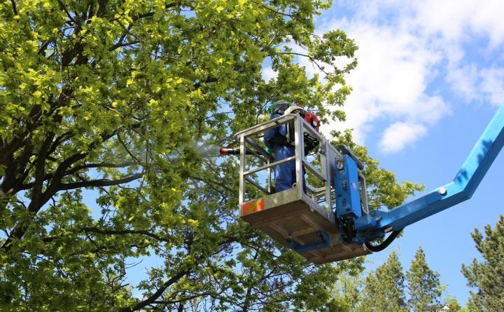 Breit aufgestellt gegen den Eichenprozessionsspinner - Foto: Stadt Haren (Ems)