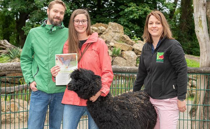 """Neuer Alpakahengst heißt """"Pedro"""" - Ein Dank an alle Tierpaten – junge Lingener Lehrerin wird Namenspatin - Foto: Franz Frieling"""