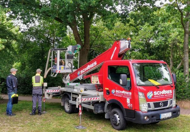 Absaugung von Eichenprozessionsspinnern abgeschlossen - Baumringfallen haben Raupen nicht gefangen - Foto: Stadt Nordhorn