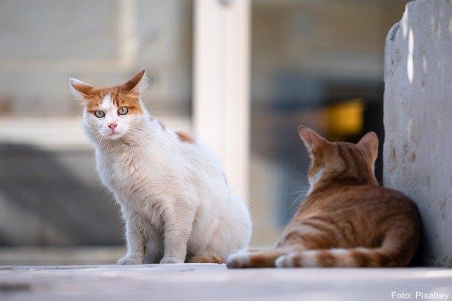 Aktion zur kostenlosen Kastration von verwilderten Hauskatzen 2020