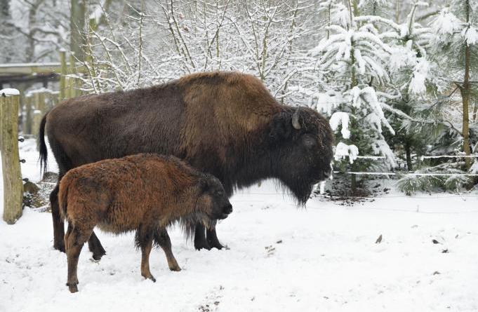 Zootiere und Wildtiere im Winterschlafmodus? - Wer sich im Winter einmummelt und wer munter bleibt - nachgefragt im Tierpark Nordhorn - Foto: Franz Frieling