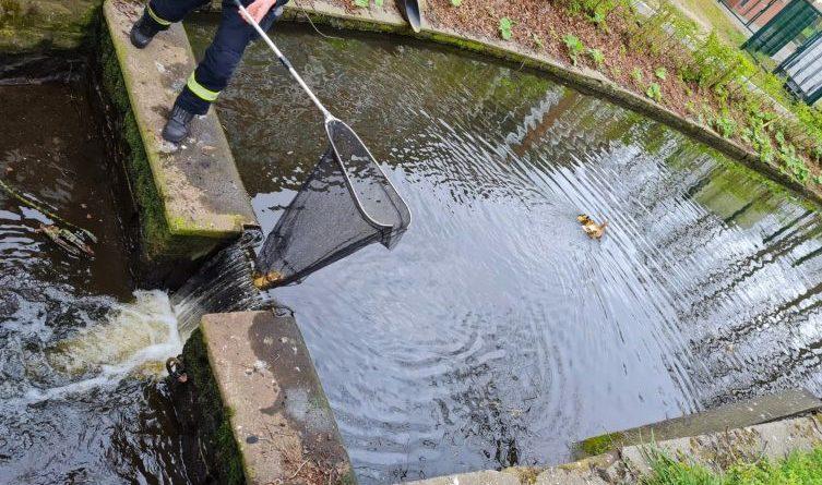 Feuerwehr Meppen rettet Entenfamilie - Foto: Feuerwehr Meppen