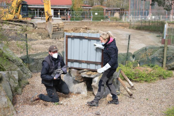 """Die Humboldt-Pinguine einzufangen ist nicht einfach: Andreas Wulftange, zoologischer Leiter, und Alina Niebler, Tierpflegerin, bringen die 21 Vögel in ihr neues """"Zuhause auf Zeit"""" neben der Zoo-Gaststätte. Für Besucher sind die Humboldt-Pinguine während der Umbauarbeiten für die """"Wasserwelten"""" bis zum Sommer 2022 nicht zu sehen. Foto: Lisa Simon"""