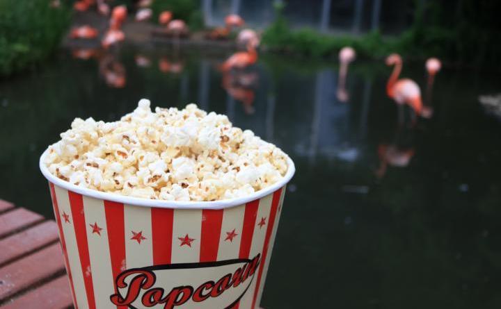Jetzt Tickets sicher: Open-Air-Kino im Zoo Osnabrück - Vorverkauf für Open-Air-Kino in tierischer Kulisse startet am 16. Juli