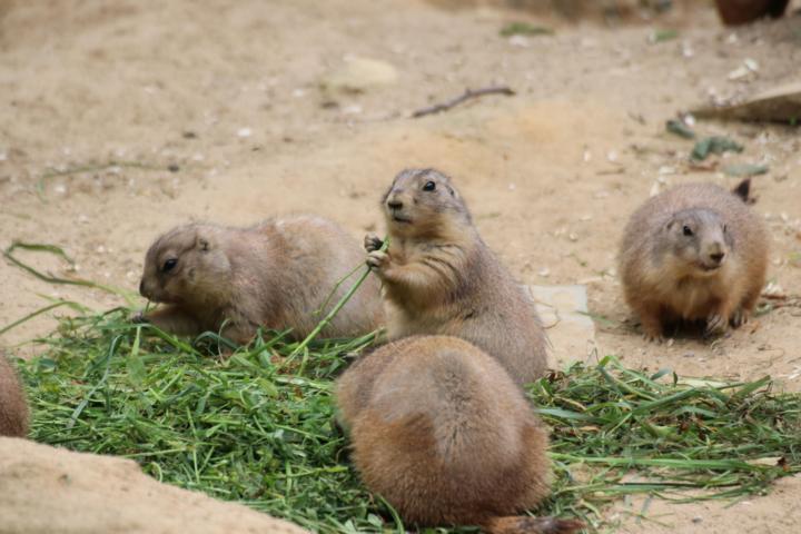 Ab in den Zoo: Am kommenden Sonntag bietet der Zoo Osnabrück den von der Bombenräumung betroffenen Anwohnern im Stadtteil Schinkel 50 Prozent Rabatt auf Tageskarten an (Nachweis Personalausweis mit Anschrift). Foto: Zoo Osnabrück (Denise Matthey)