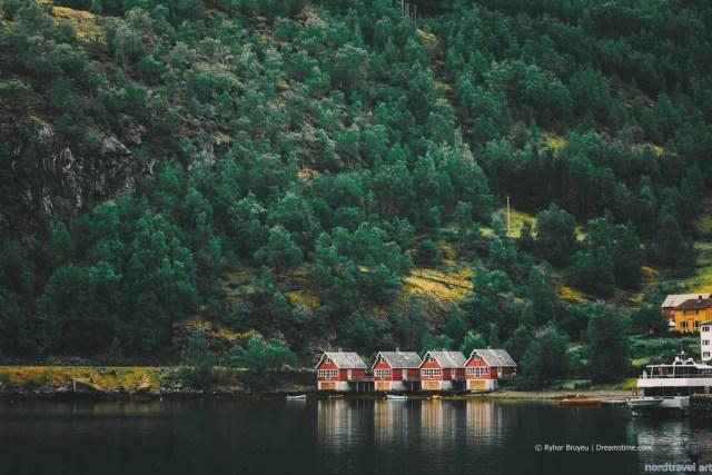 Леса по берегам фьордов (Согнефьорд)